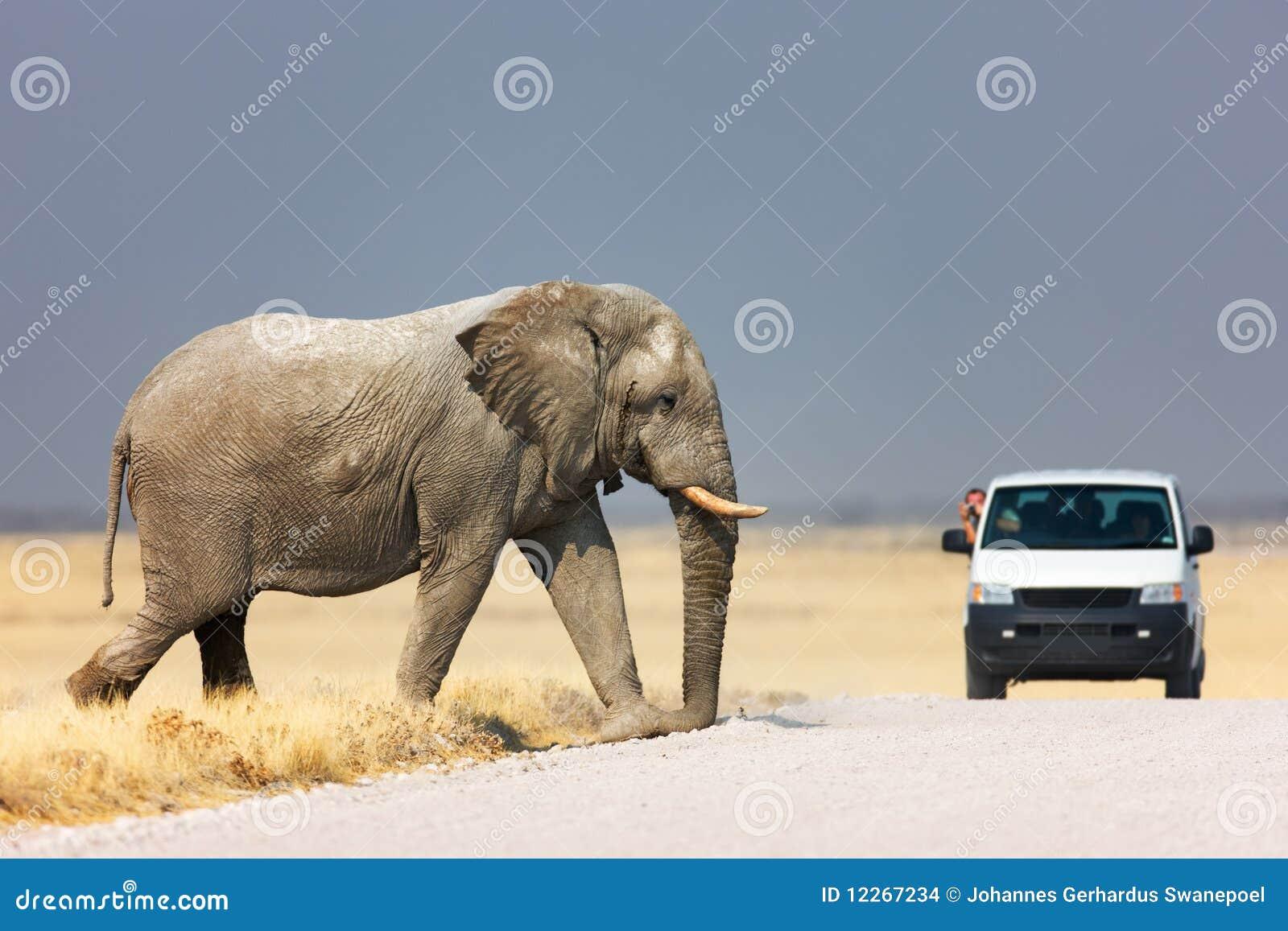 Camino de la travesía del elefante