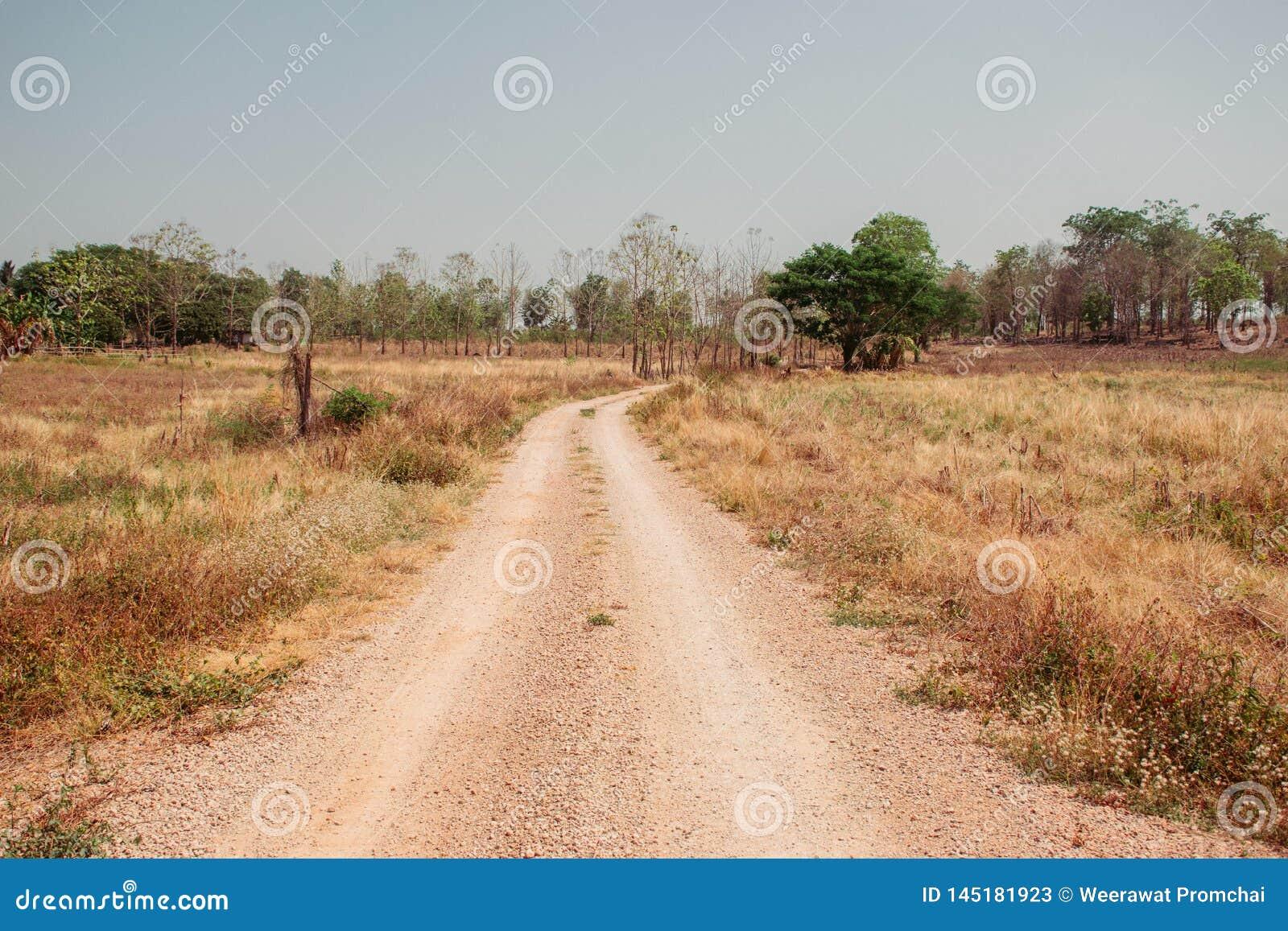 Camino de tierra abajo entre la selva