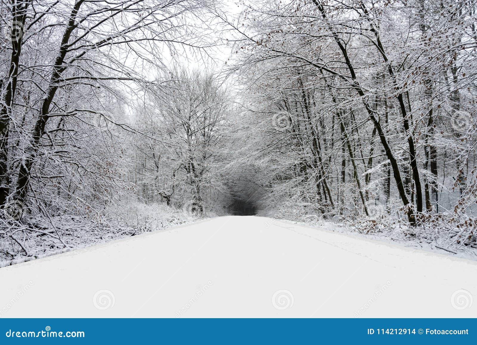 Camino del invierno en bosque por completo de la nieve