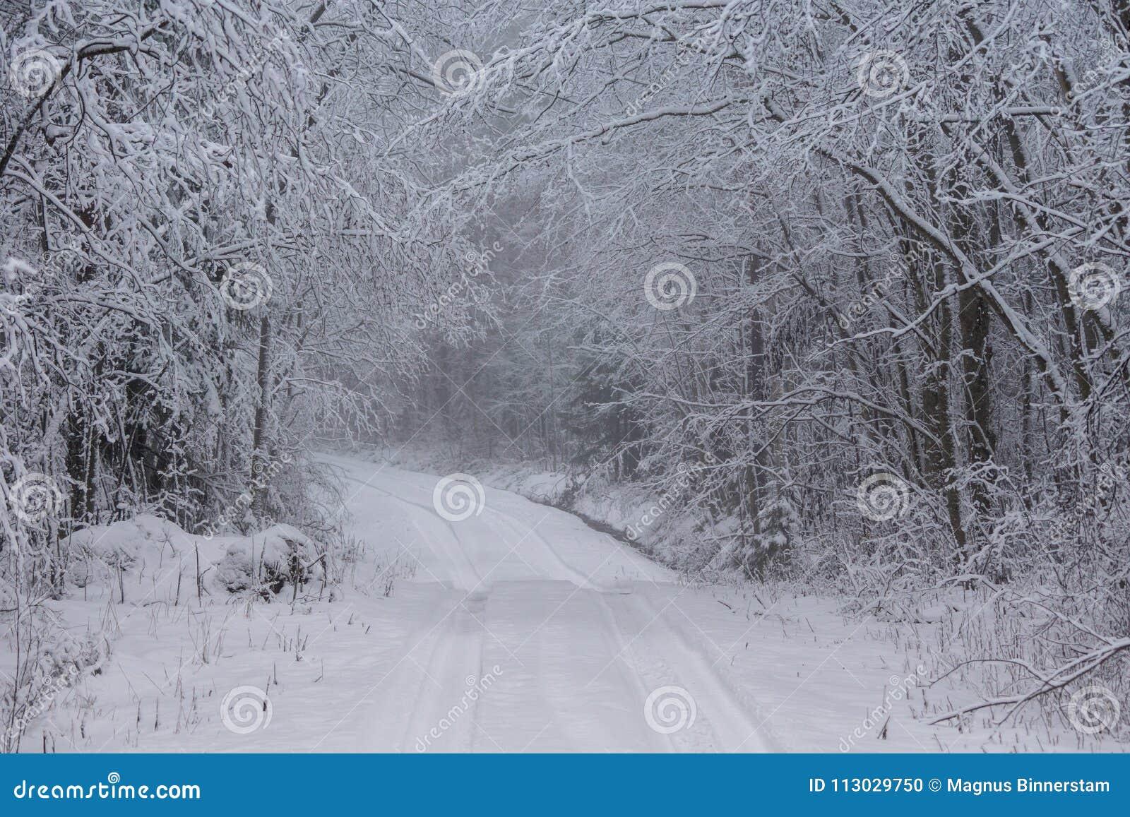 Camino del invierno en el campo sueco