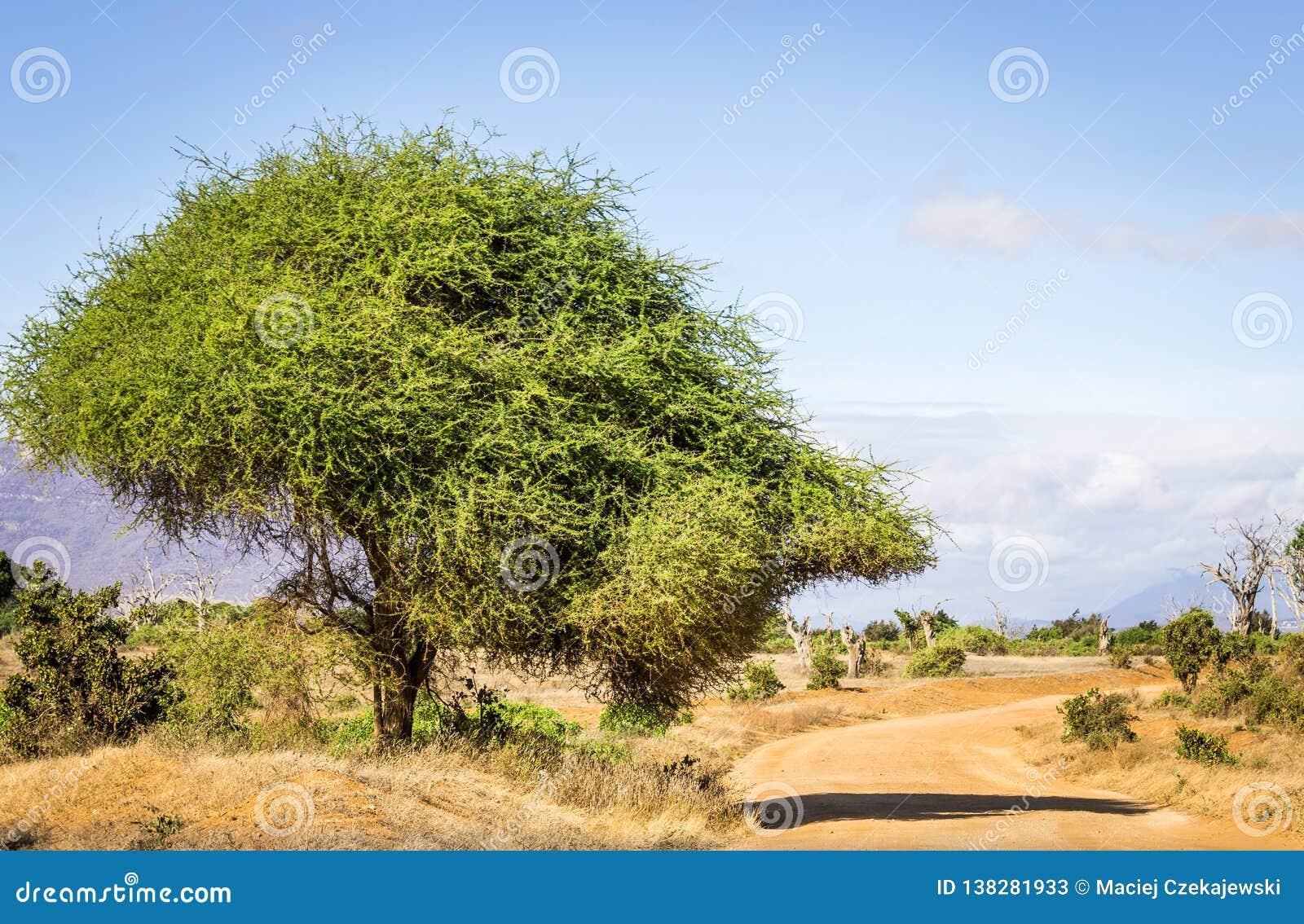 Camino del safari en Kenia