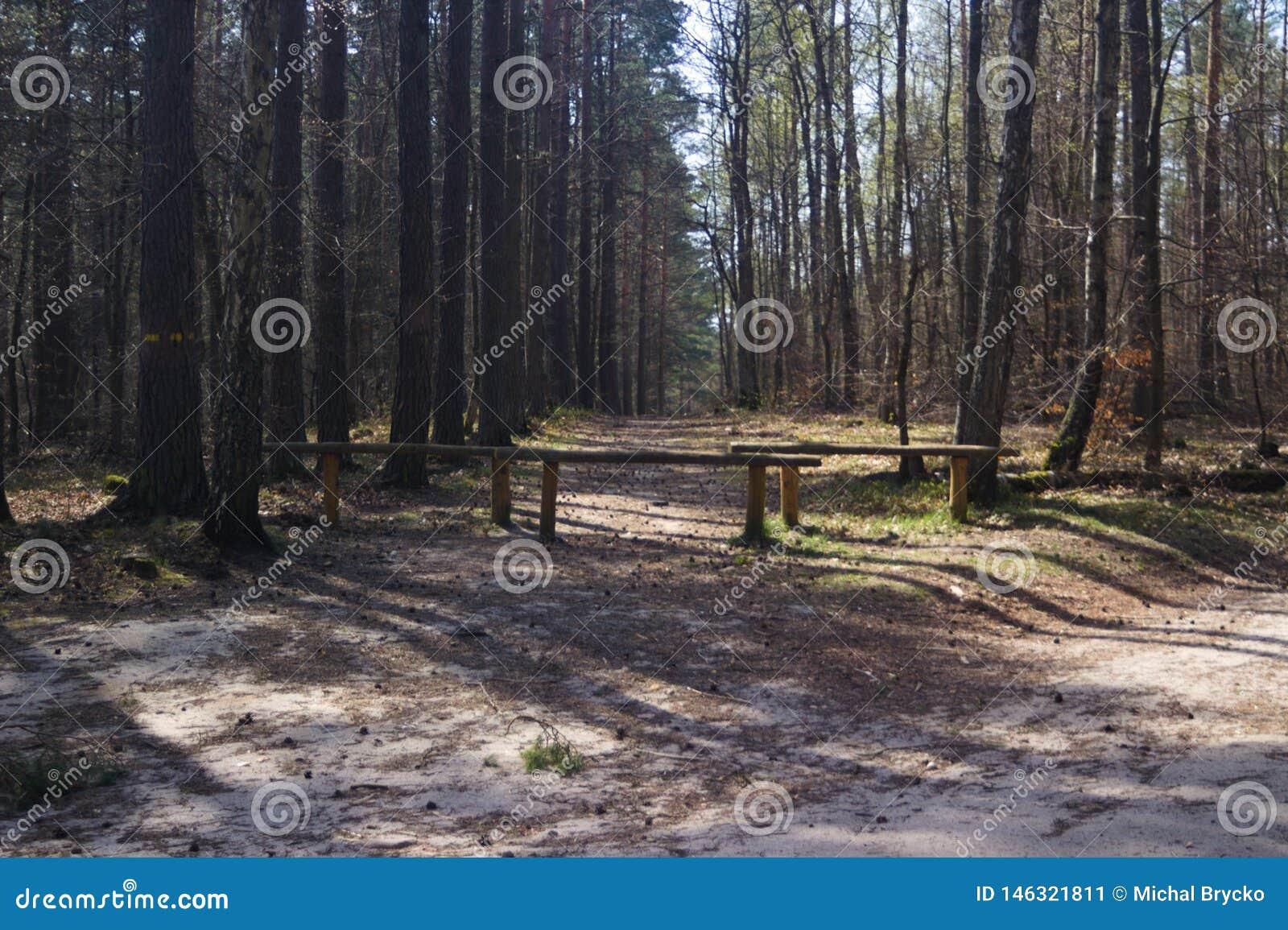 Camino en bosque