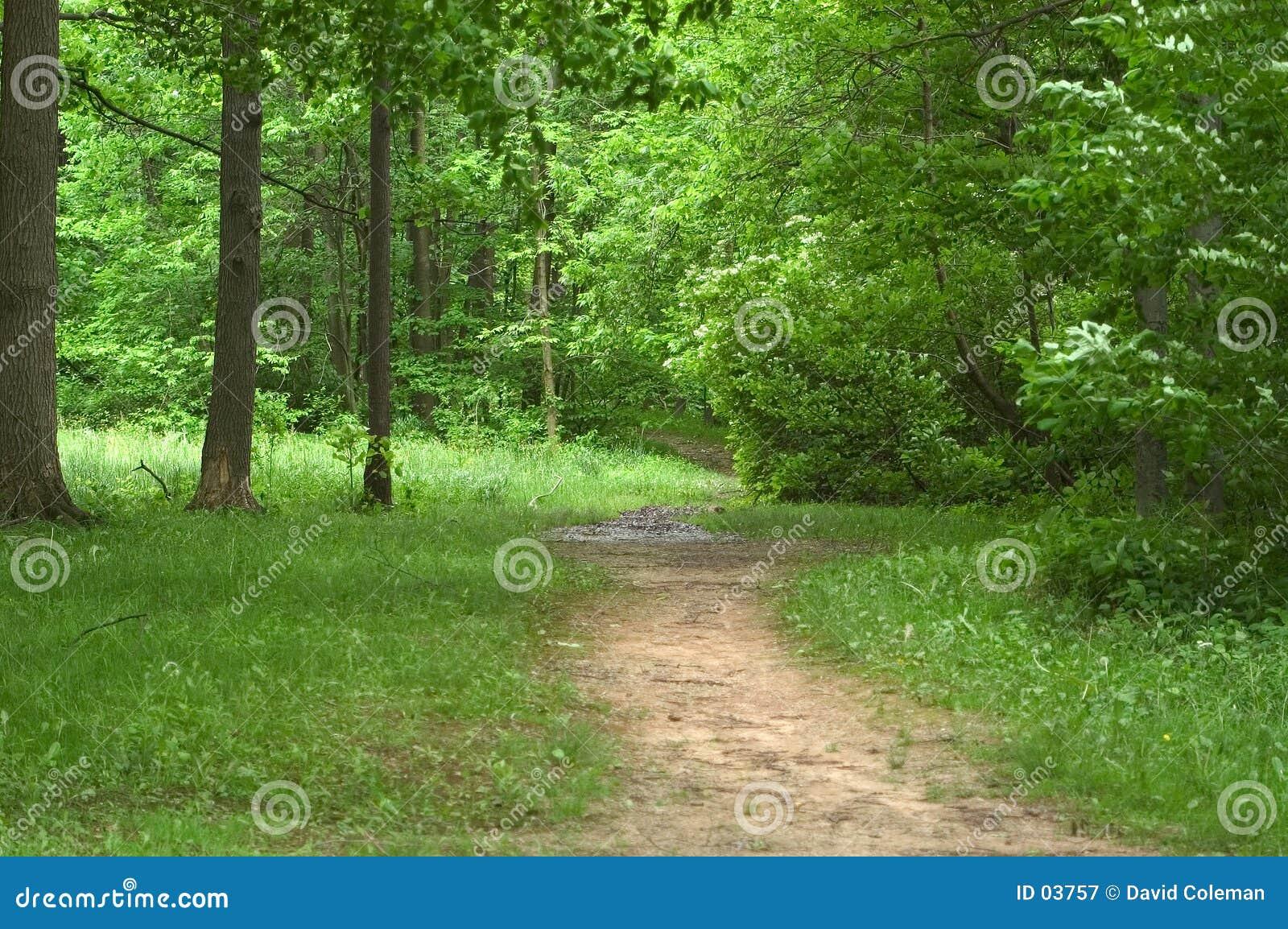 Camino en las maderas
