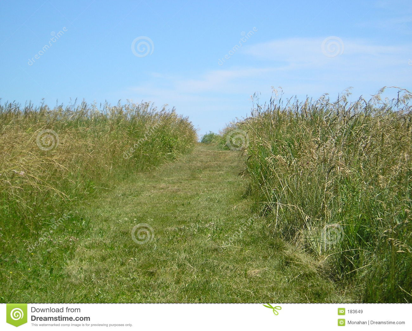 Camino en prado