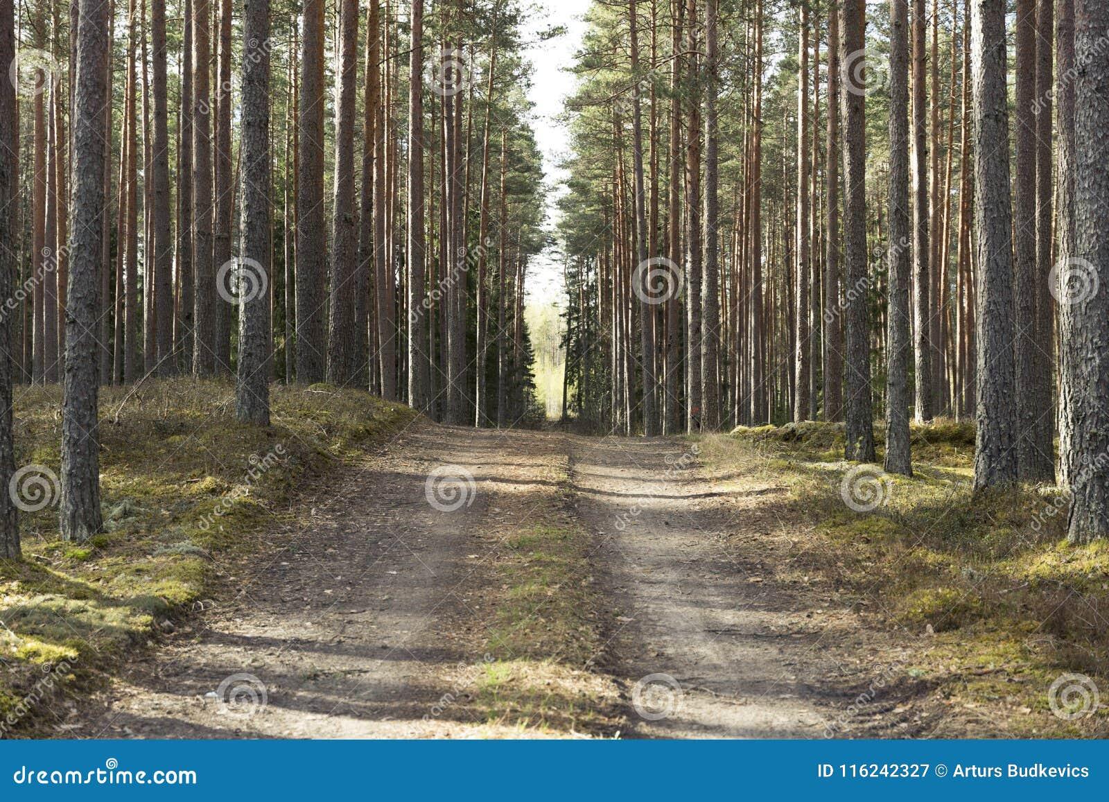Camino en un bosque hermoso por la mañana Rastro del bosque