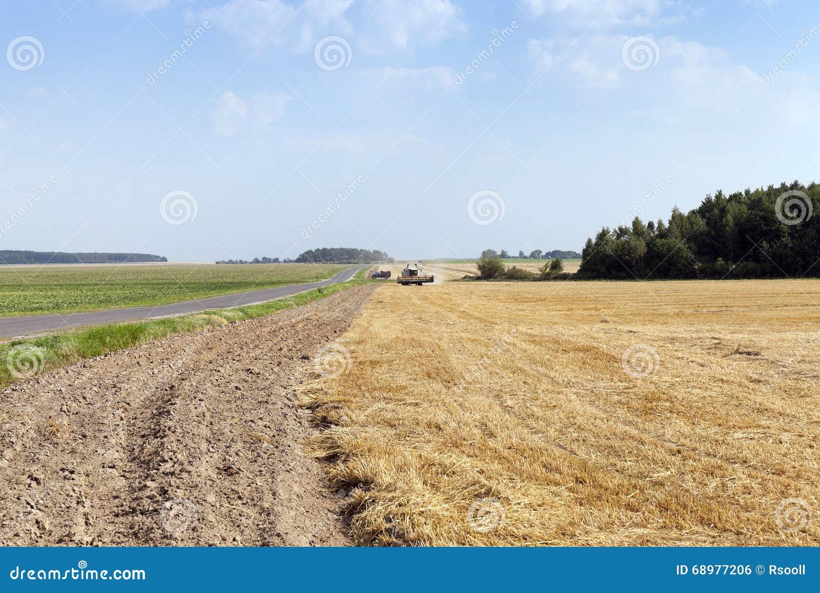 Camino en un campo