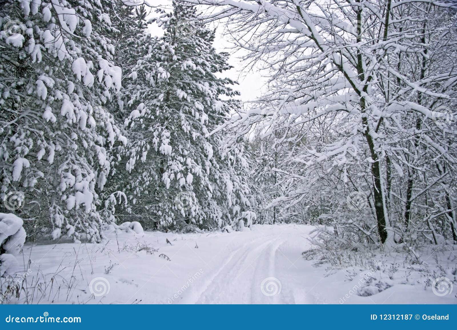Camino estacional escénico del invierno