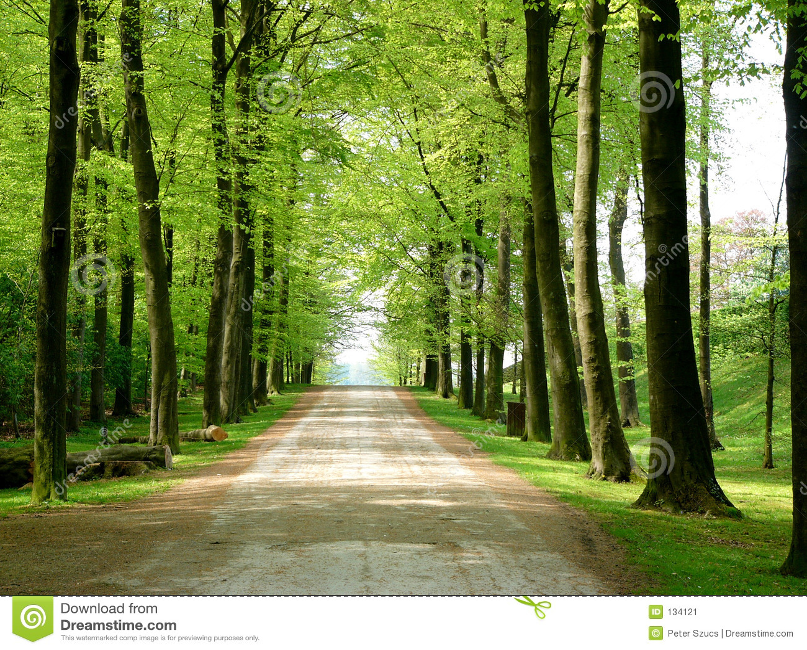 Camino que recorre del bosque del camino