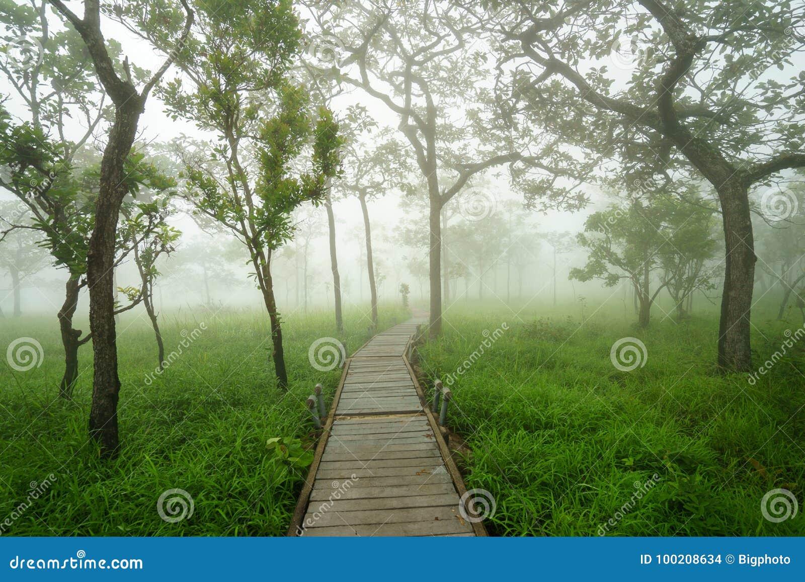 Camino a través de árboles verdes en la niebla de la mañana