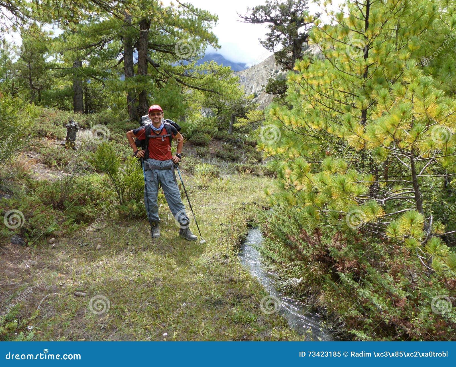 Camino a través del bosque del pino