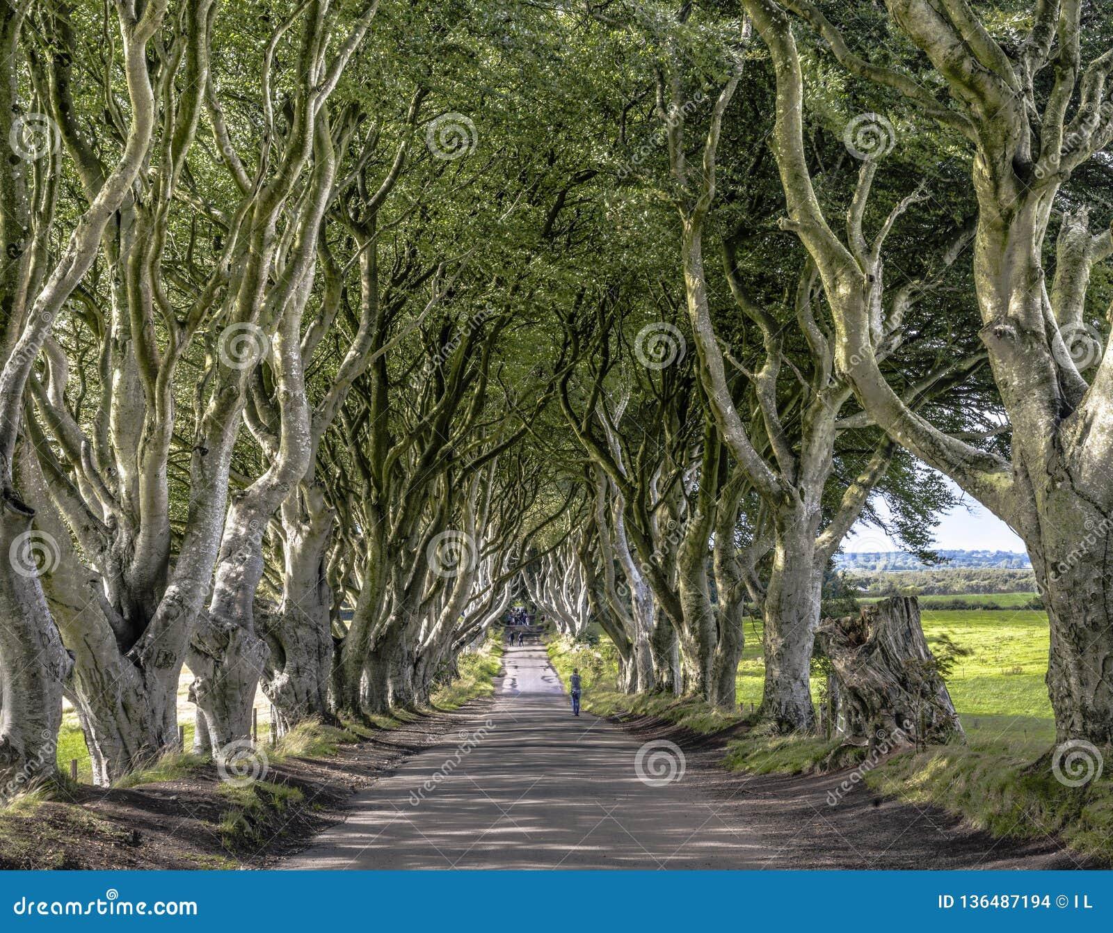 Camino a través del callejón oscuro de los setos, Armoy, Irlanda del Norte