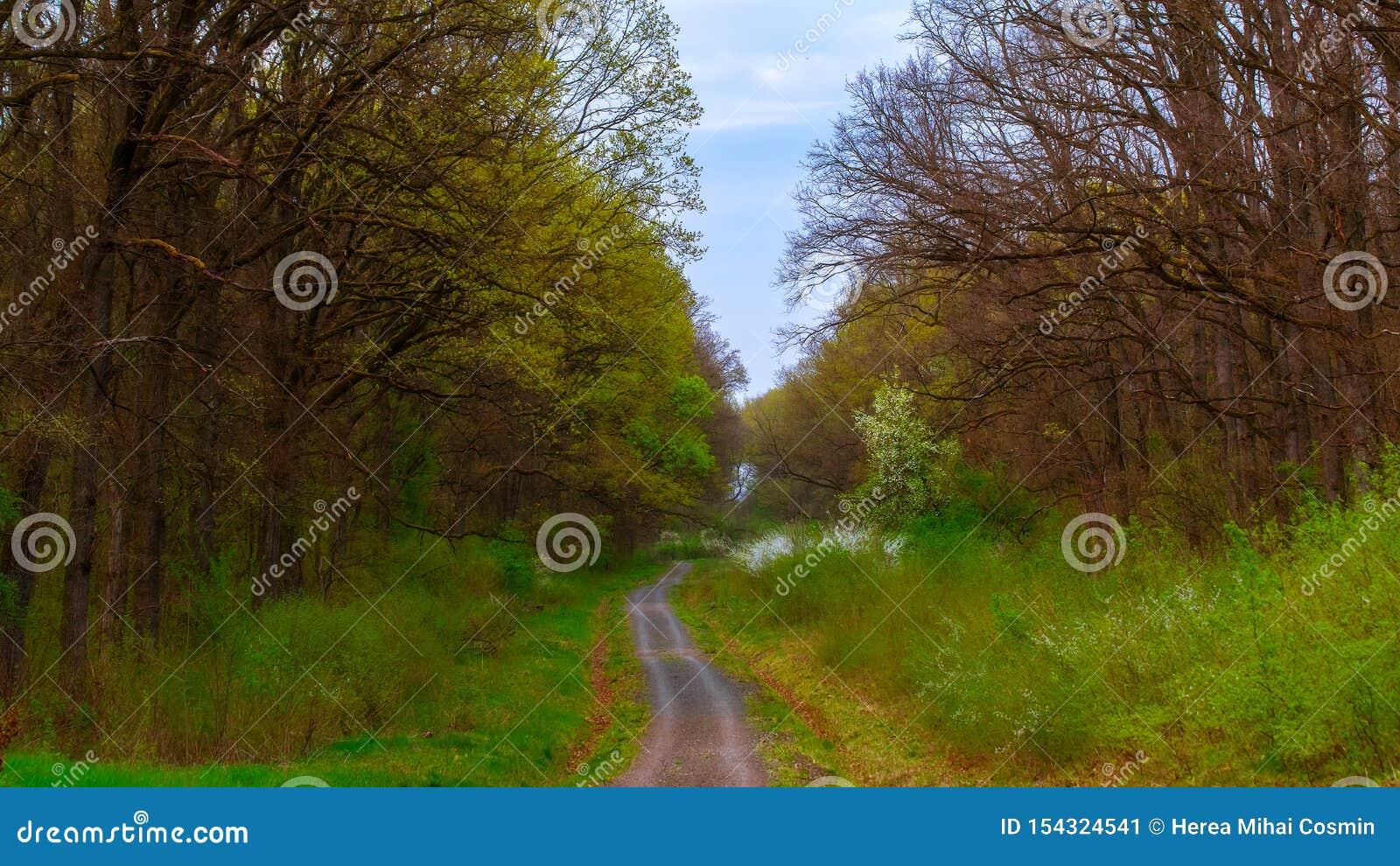 Camino a trav?s del bosque