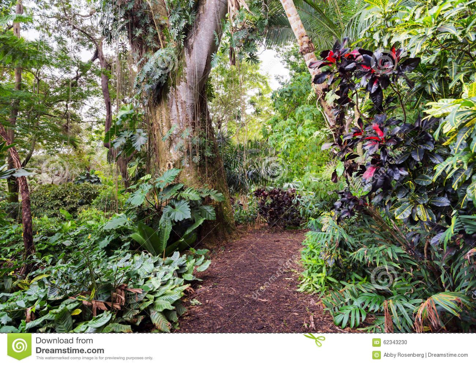 Camino tropical de la selva