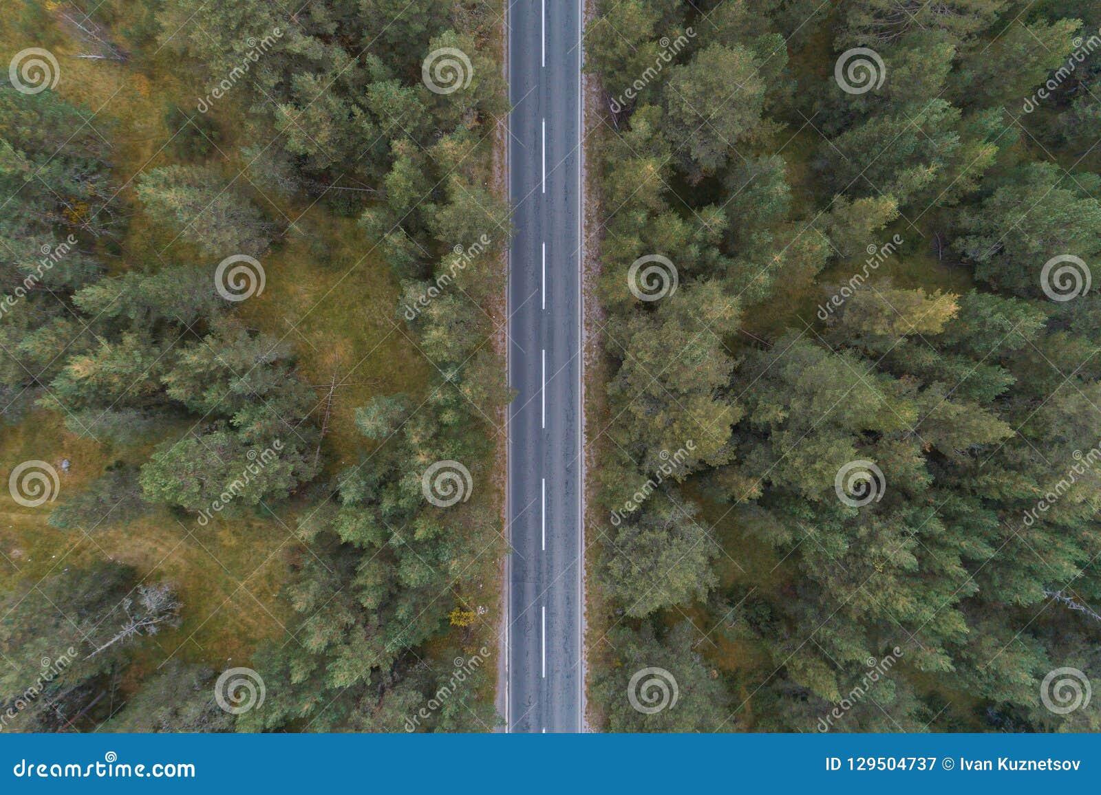 Camino vacío con la opinión aérea del bosque del pino