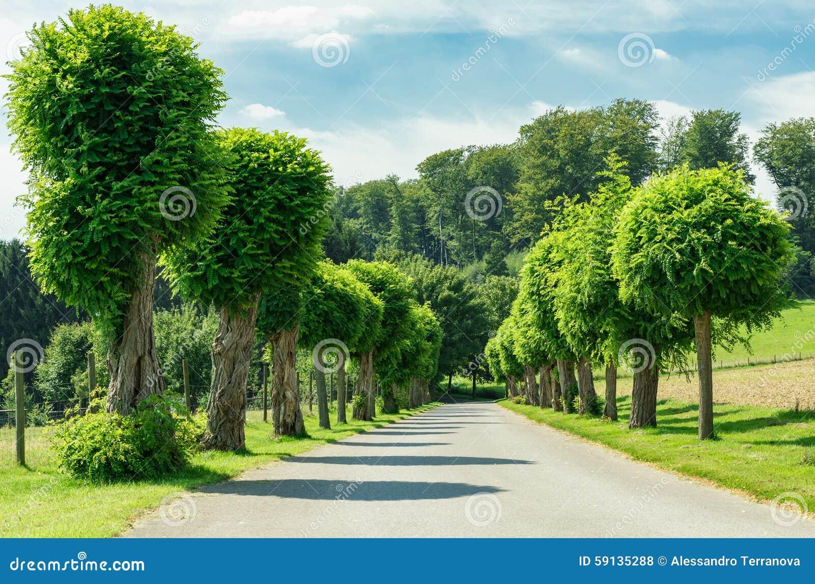 Camino y naturaleza