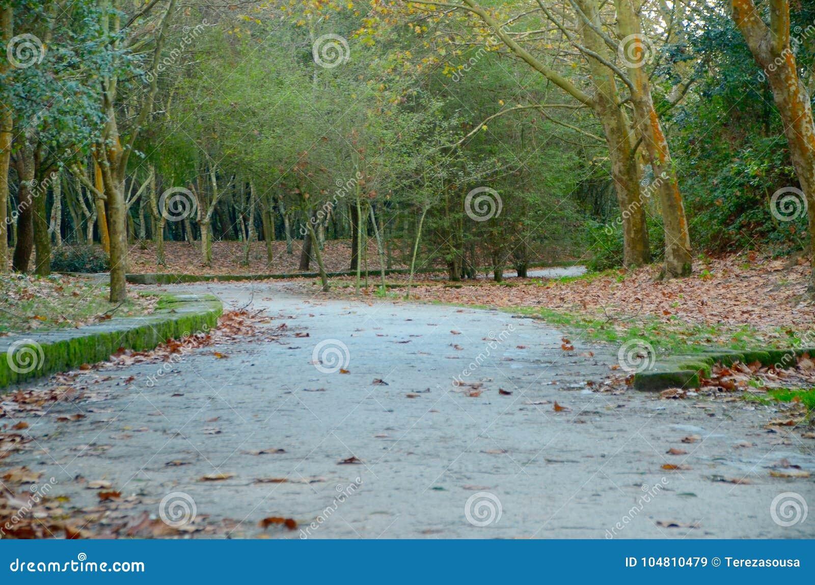 Camminando nel parco