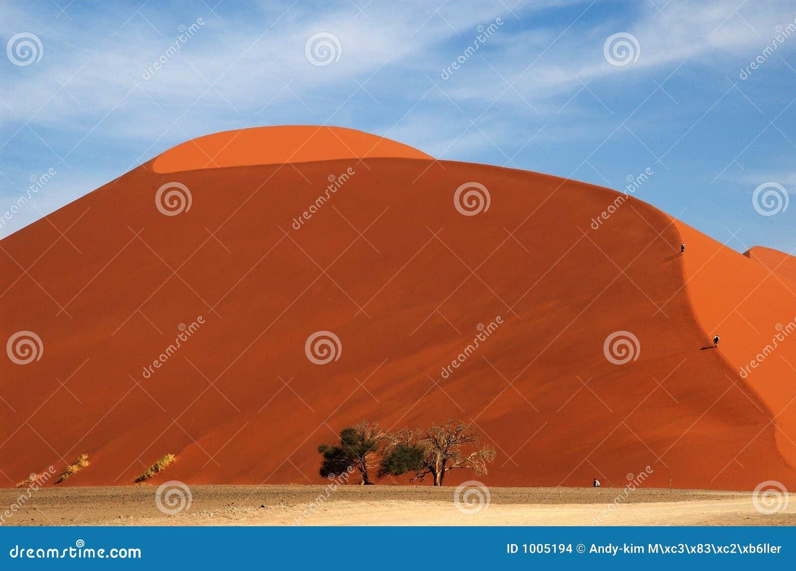 Camminando sulla duna 45 nel totale