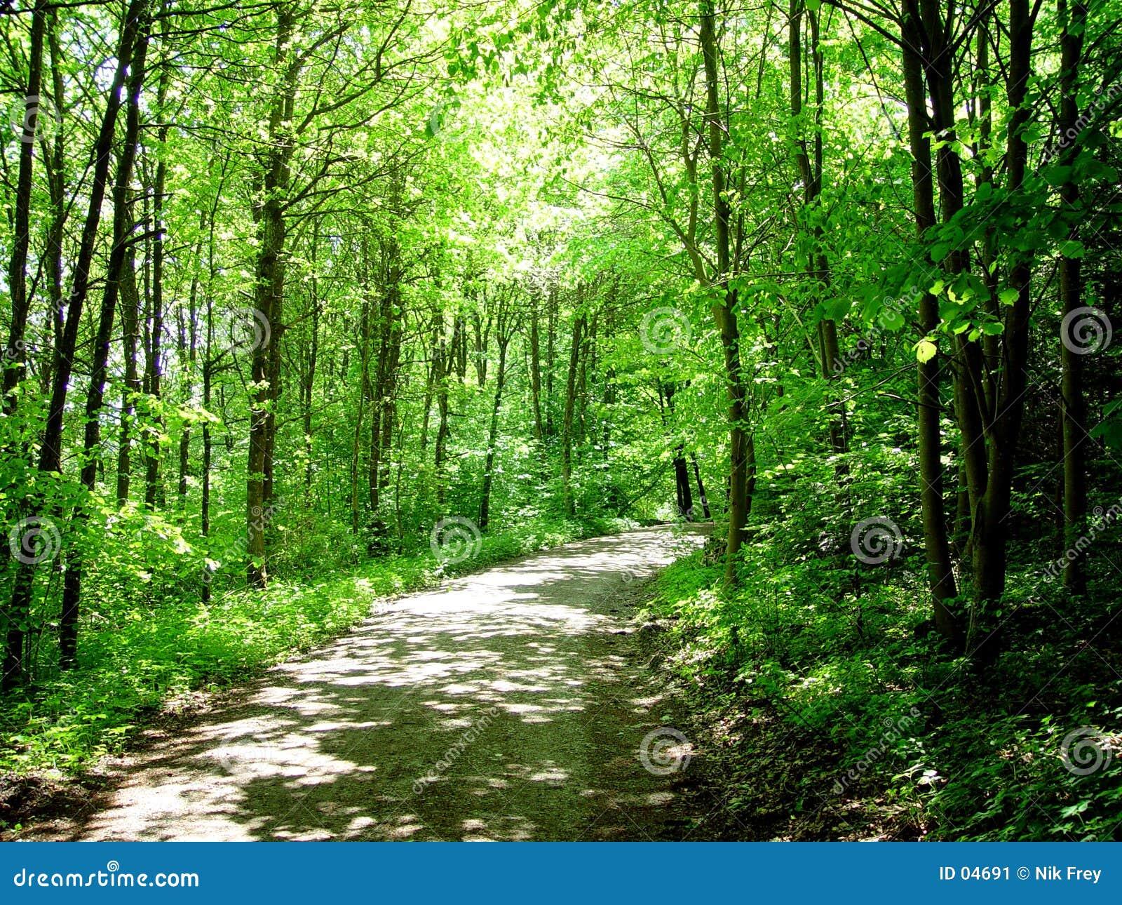 Camminata della foresta