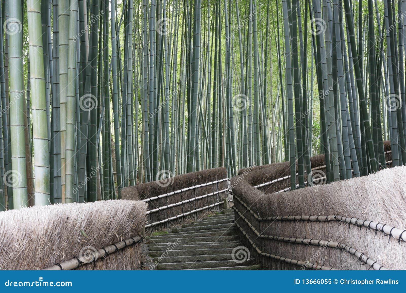 Camminata di bambù della foresta,