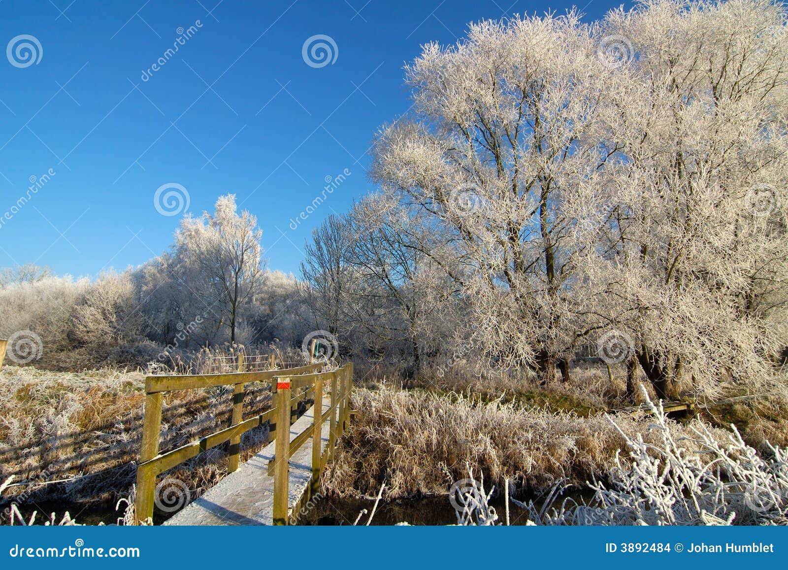 Camminata di inverno