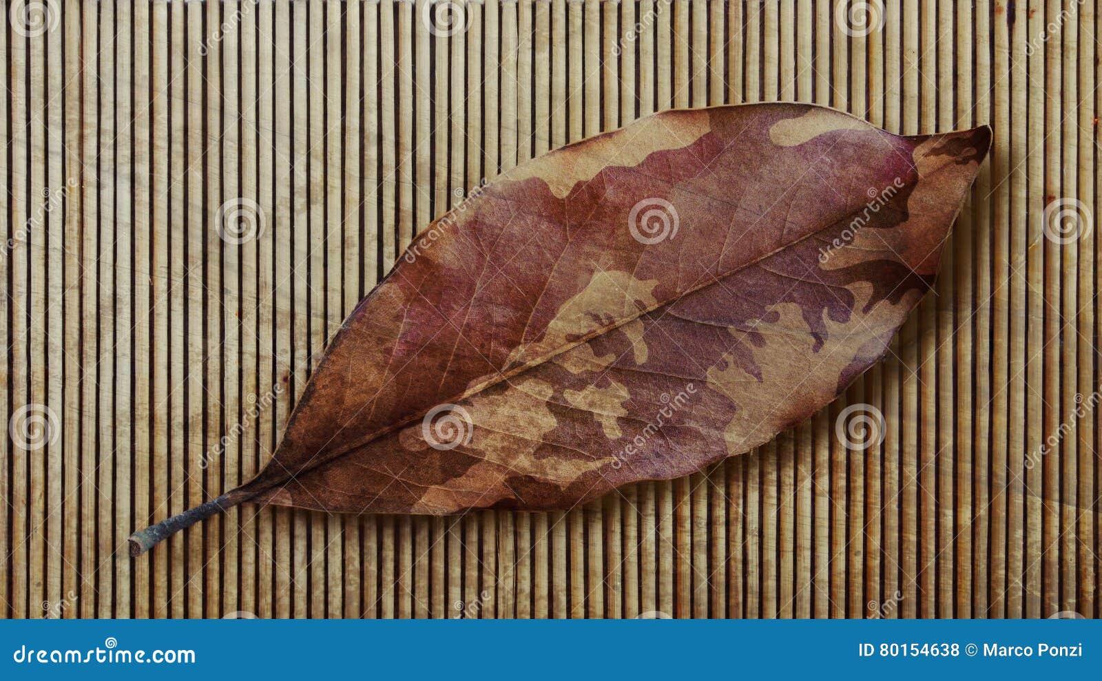 Cammuffamento autumn leaf and bamboo veterani fotografia - Papaveri e veterani giorno di papaveri e veterani ...