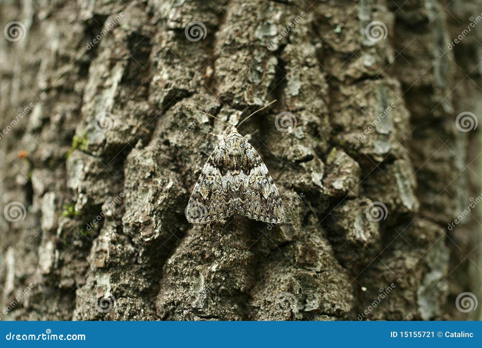 Camouflage de mite