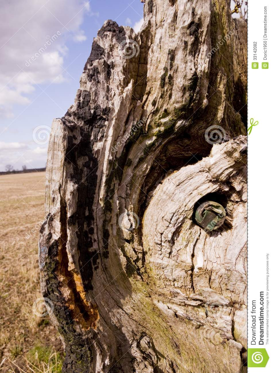 look good shoes sale new lower prices thoughts on Camouflage Geocache Hidden In A Tree Stock Photo - Image of ...