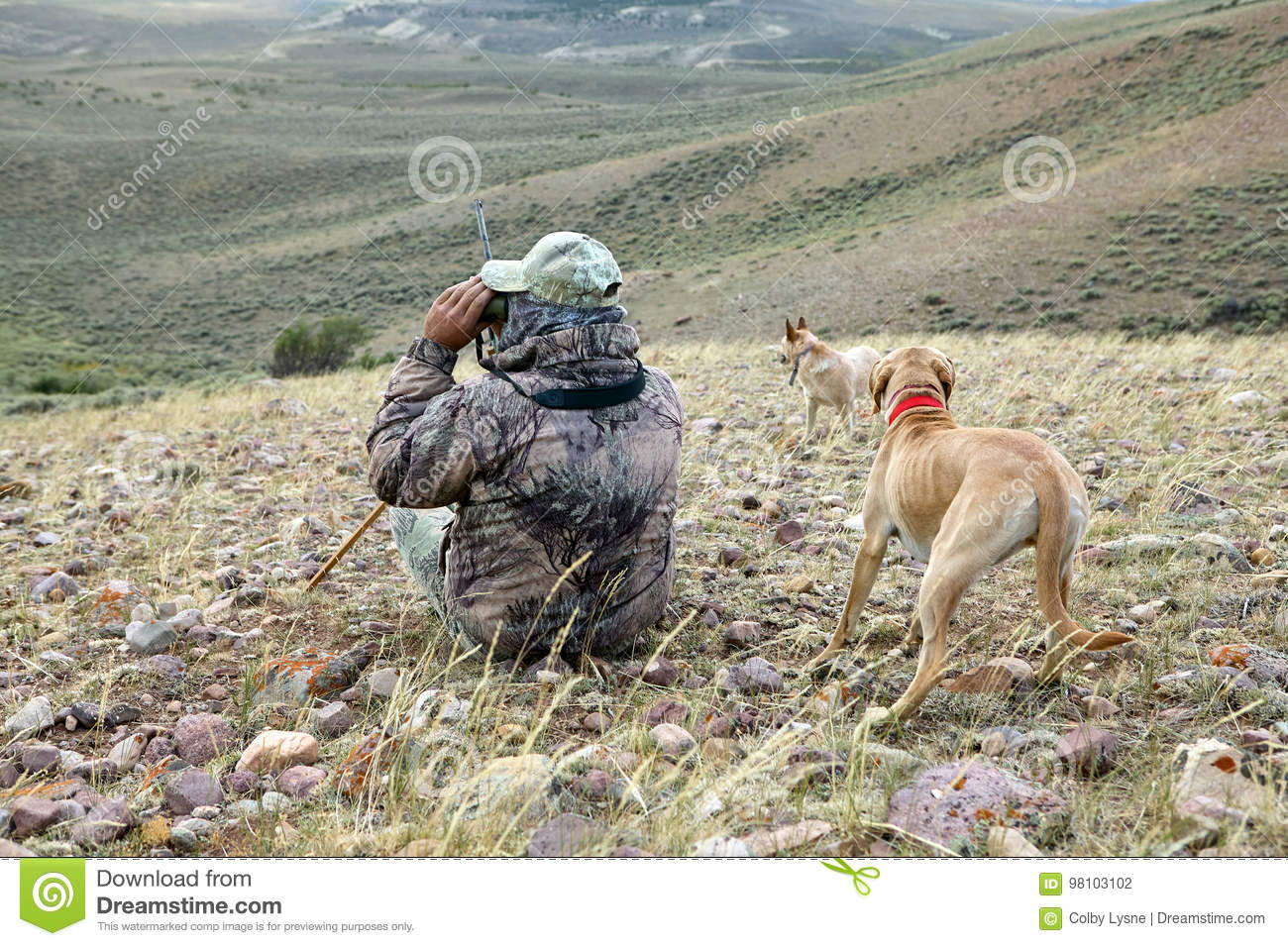 Camouflage hunter and dogs scanning arid landscape