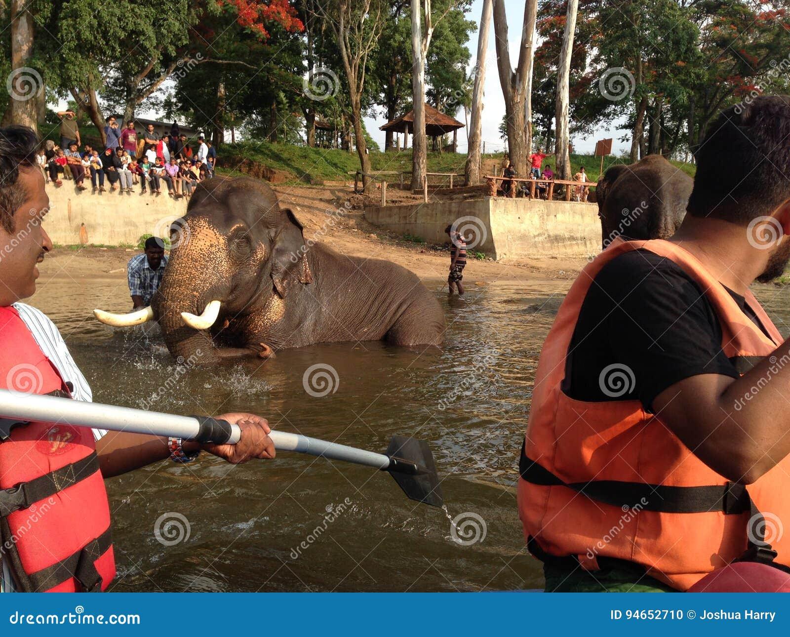 Camp d éléphant