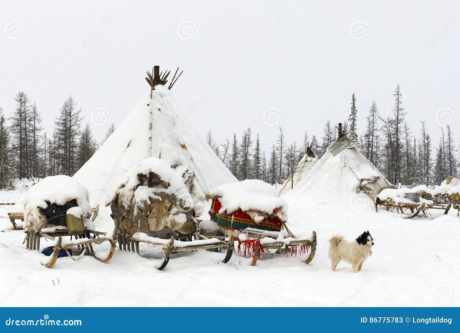 Camp de tribu nomade dans la toundra polaire