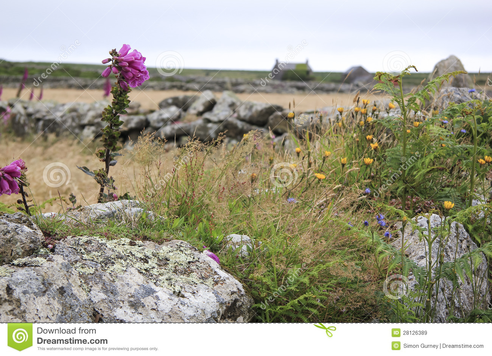 Campagna inglese di cornovaglia dei fiori selvaggi for Disegni di cottage di campagna