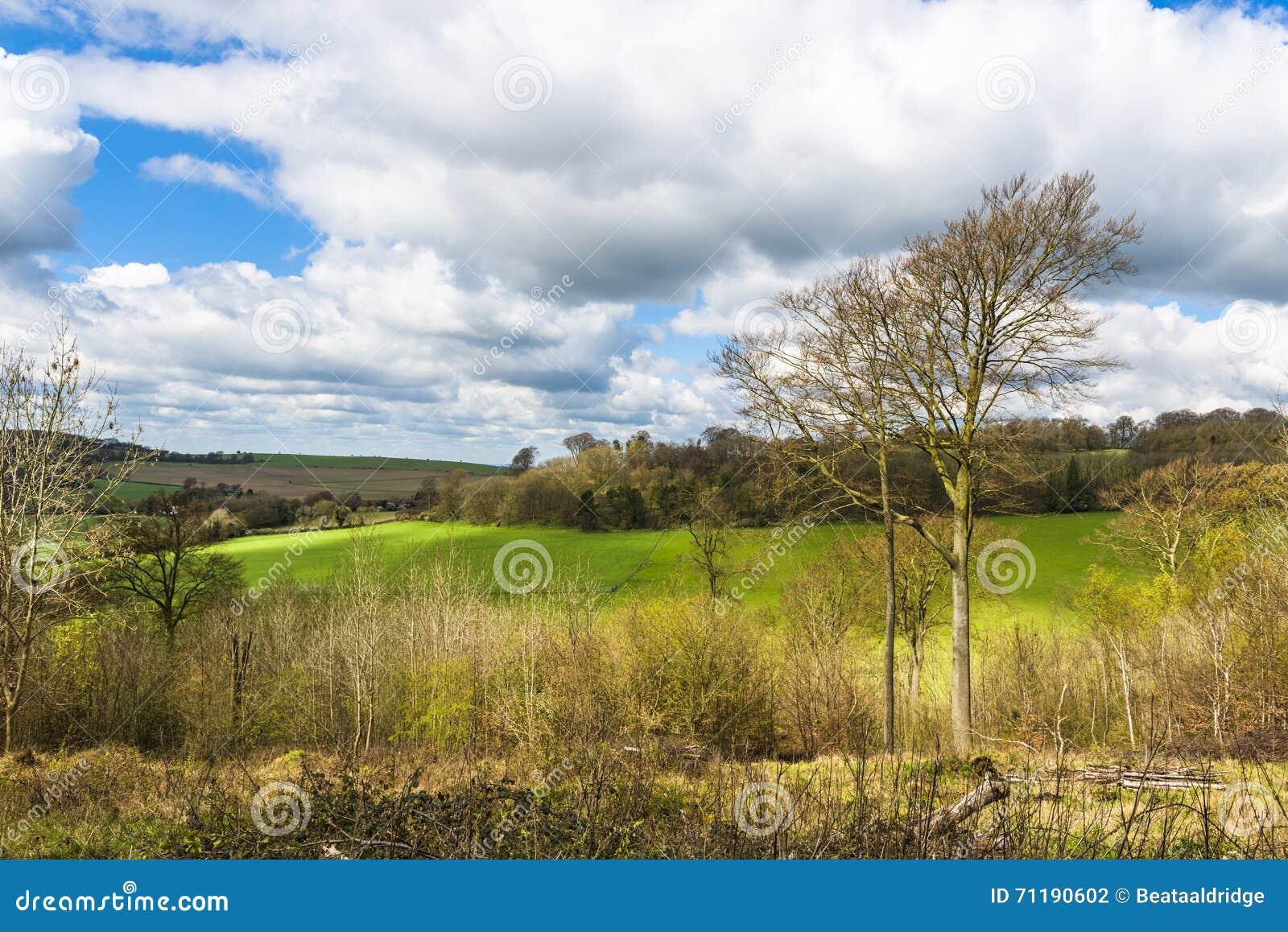 Campagna inglese in primavera hertfordshire regno unito for Piani di campagna inglese