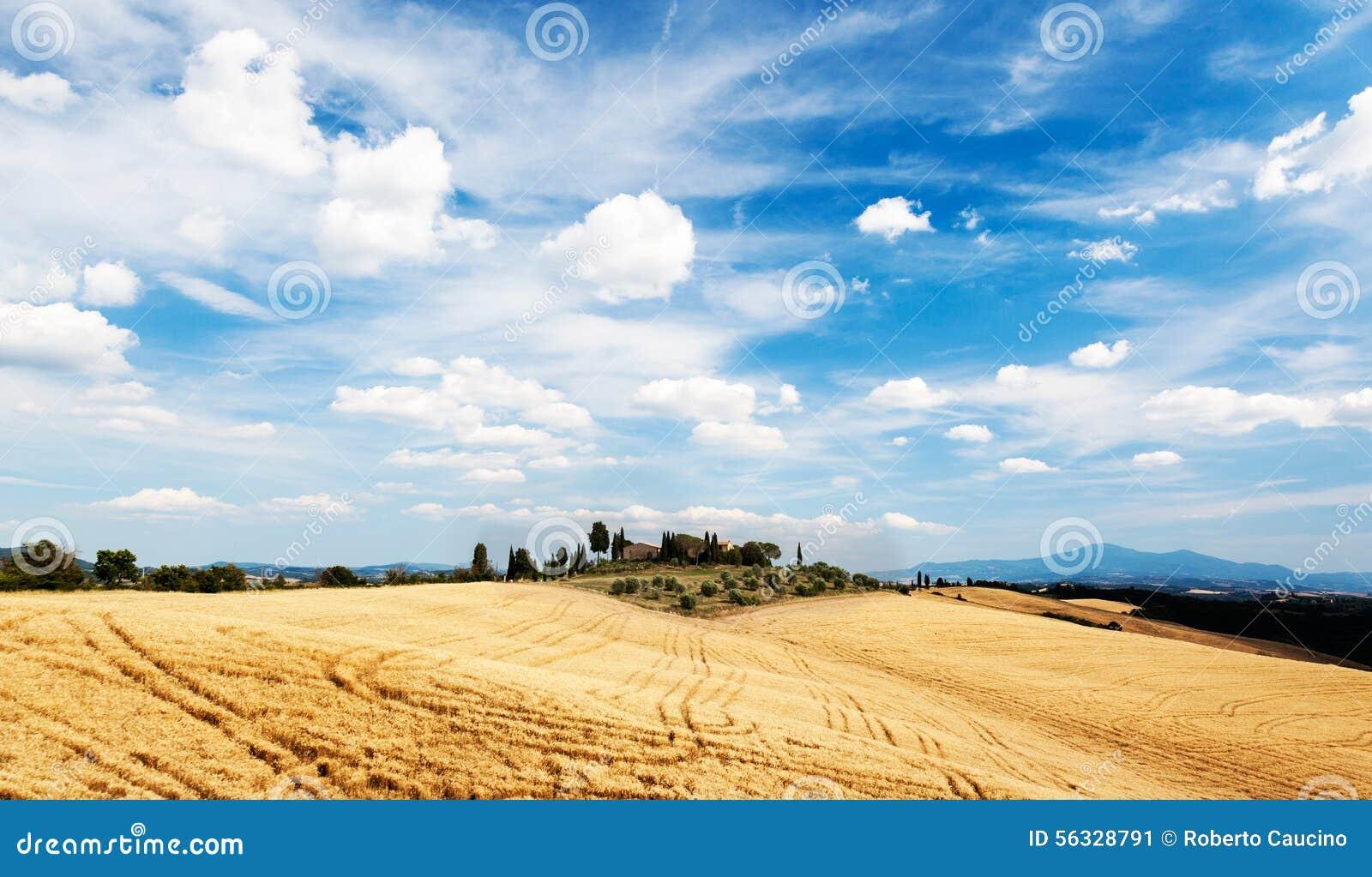 Case Rurali Toscane : Campagna toscana in un giorno soleggiato di estate case rurali sul a