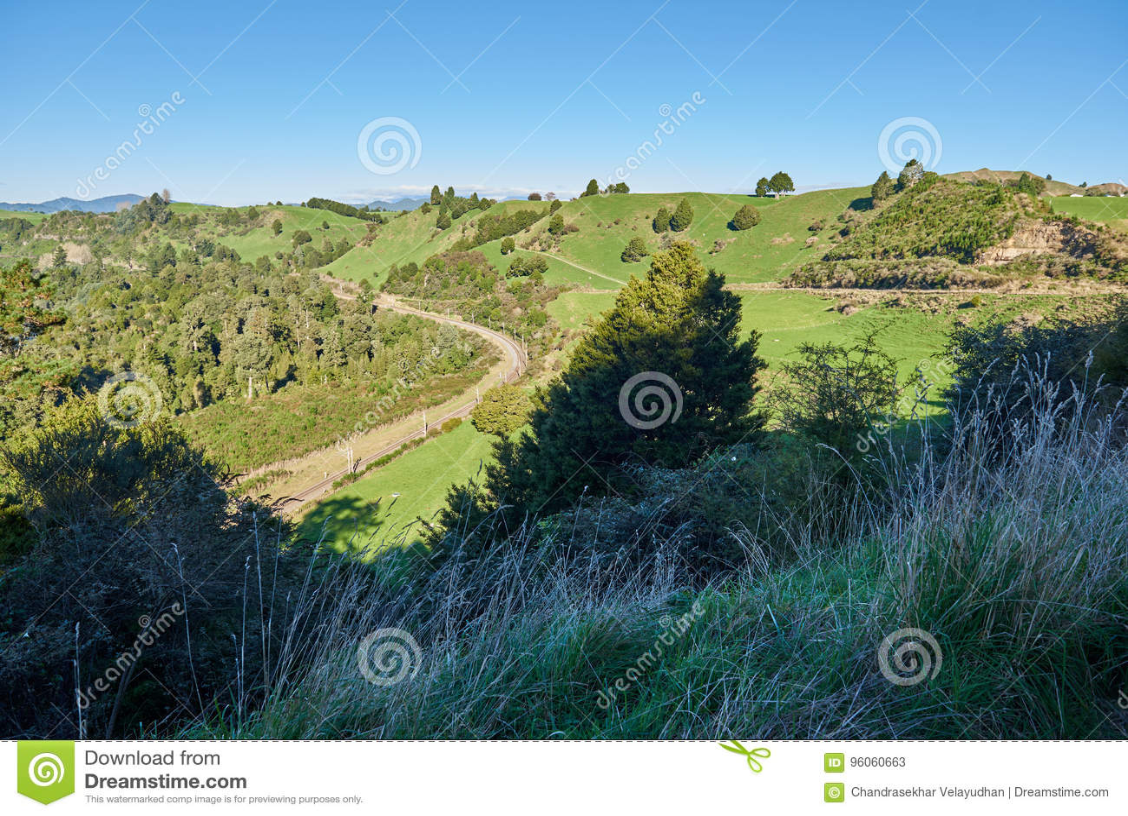Campagne de la Nouvelle Zélande de roulement avec des prés et des pâturages
