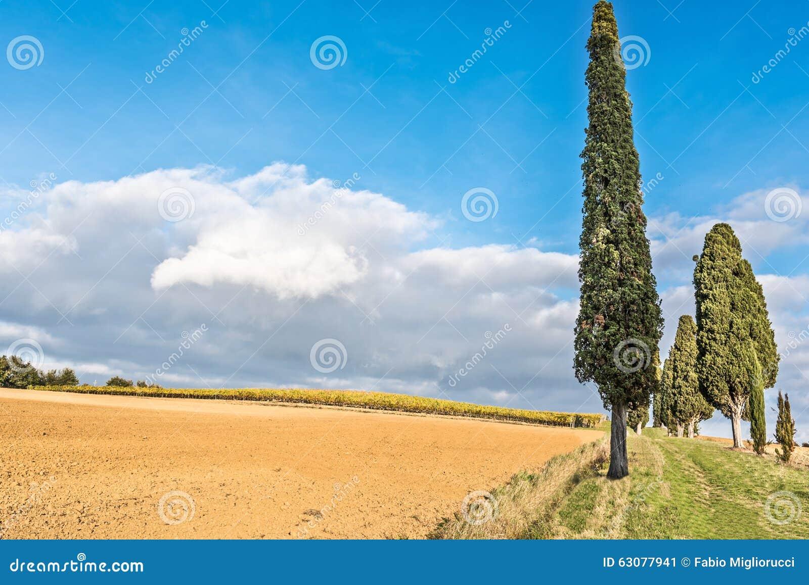 Download Campagne De Lucignano En Toscane Image stock - Image du centrales, adoration: 63077941
