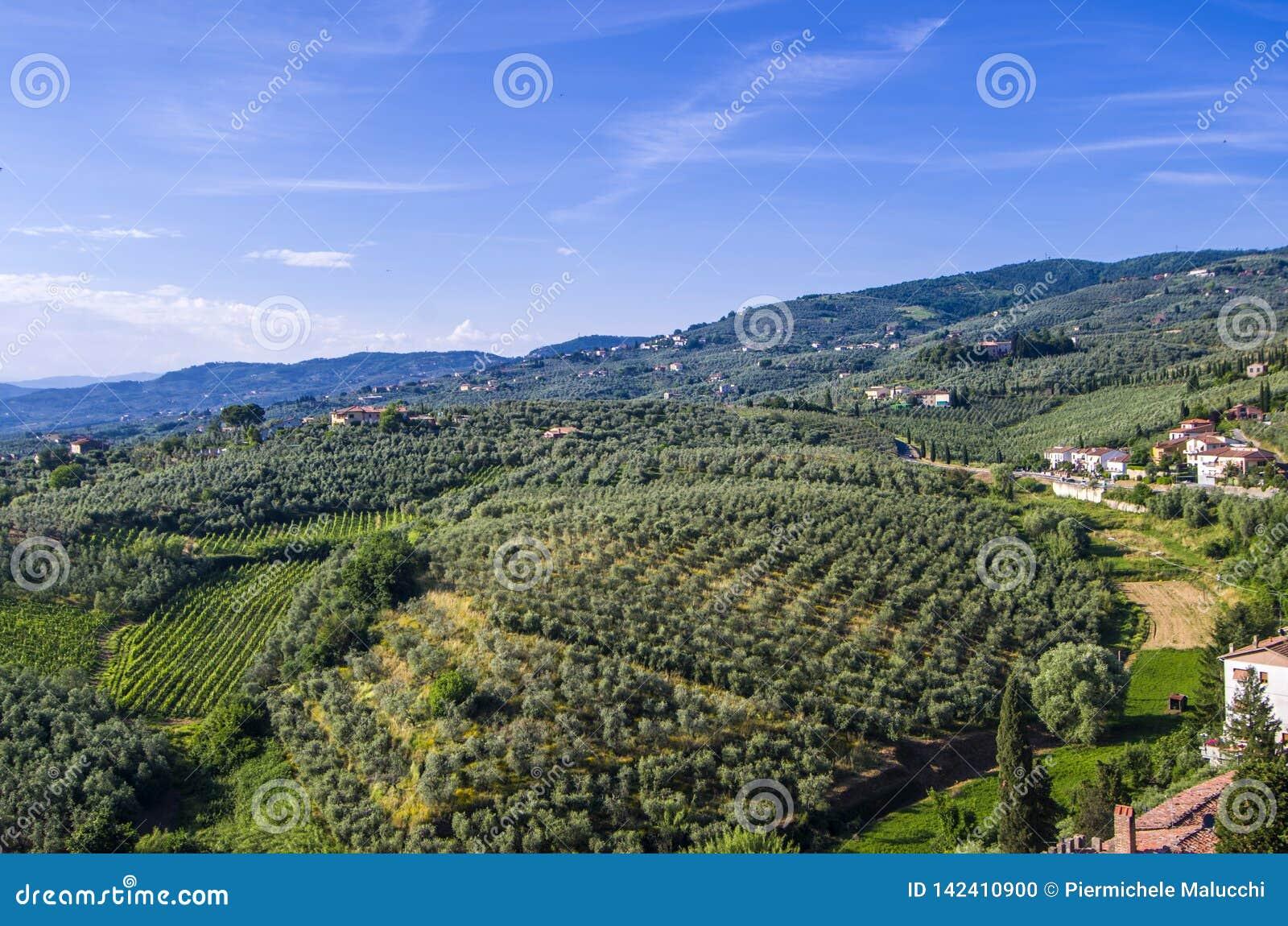 Campagne toscane avec des vignobles, des oliviers, des bois, des fermes et la ville
