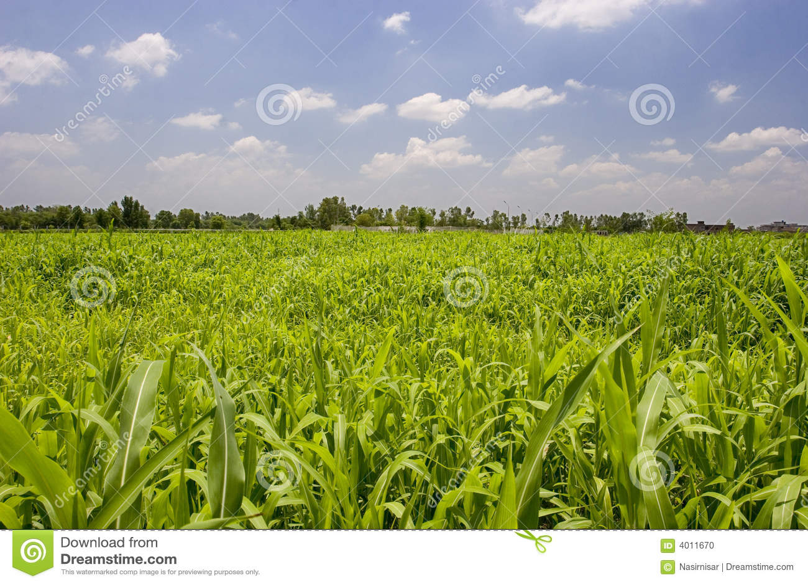 Campi del raccolto