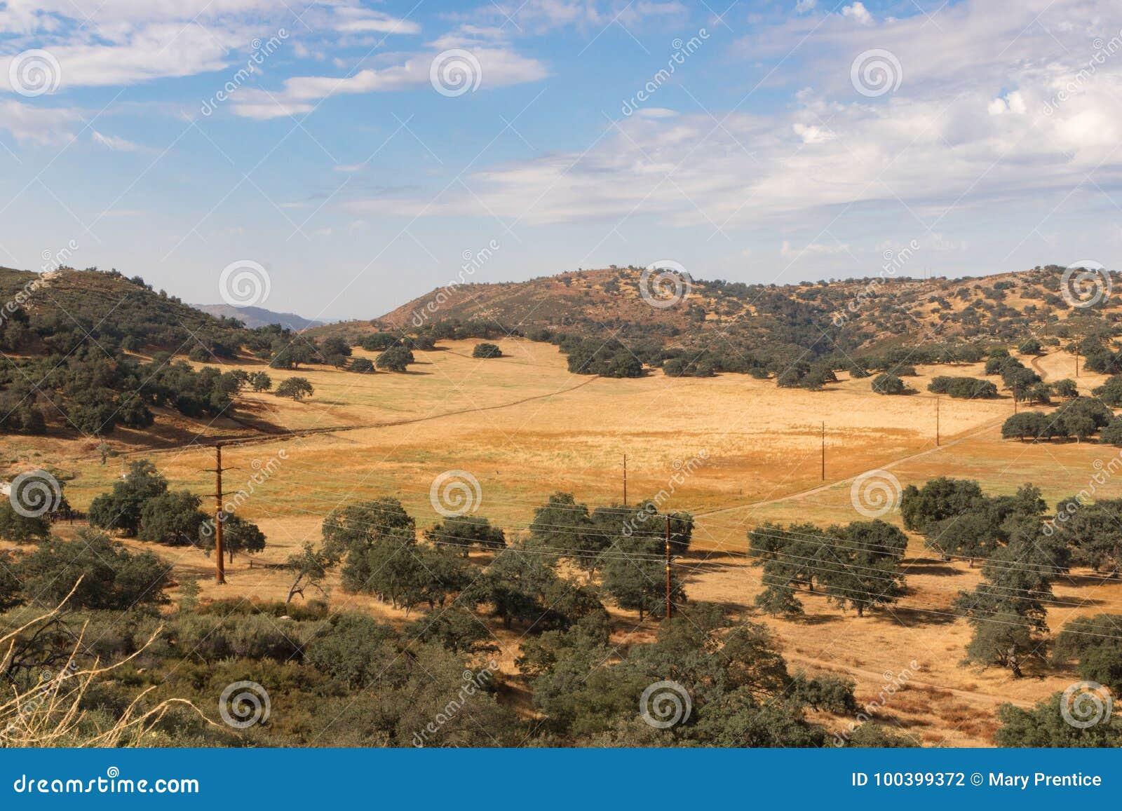 Campi dorati, grano saraceno, querce, nuvole di pioggia di tuono