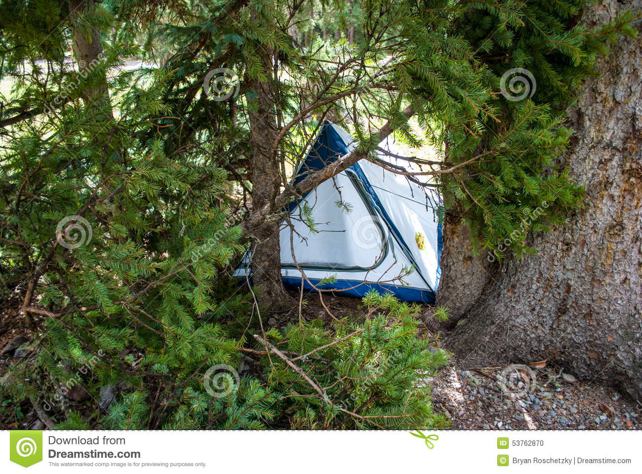 Camping Tent Hidden With Pine Tree Branches Stock Photo Image Of