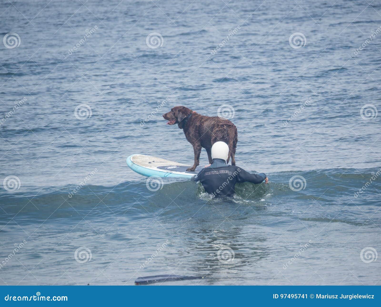 Campionati praticanti il surfing del cane del mondo