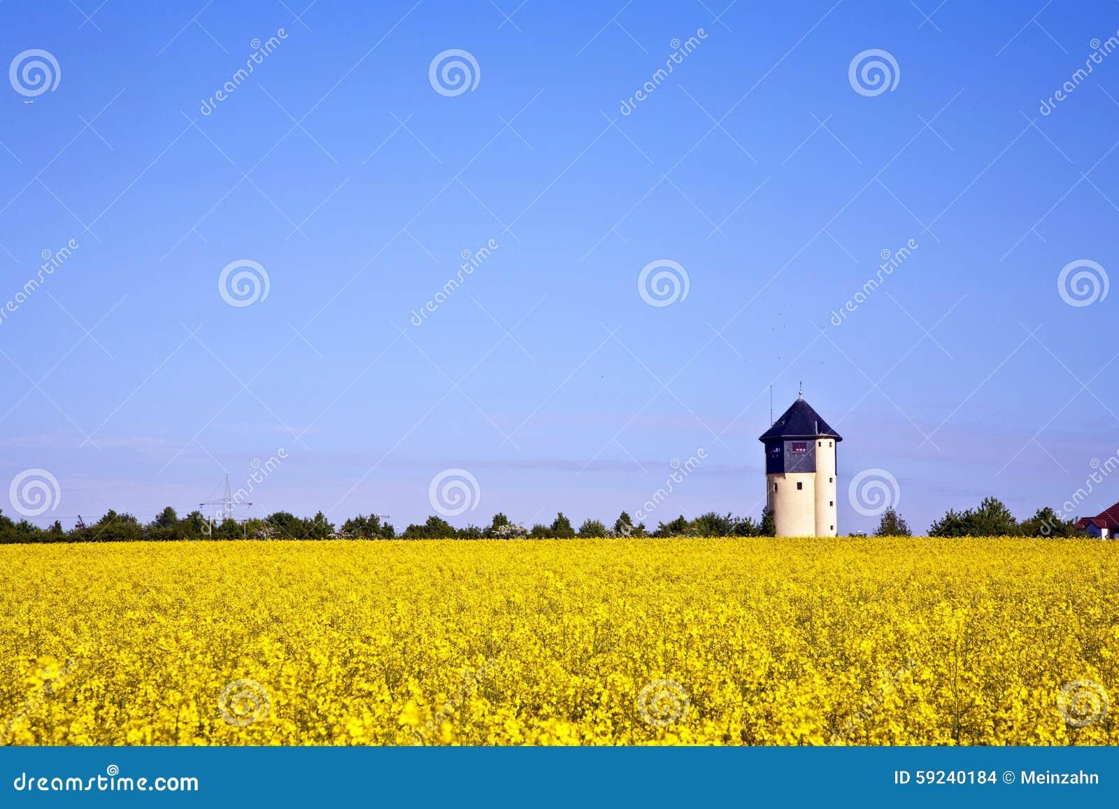 Download Campo Amarillo De La Violación En Resorte Foto de archivo - Imagen de cubo, brillante: 59240184