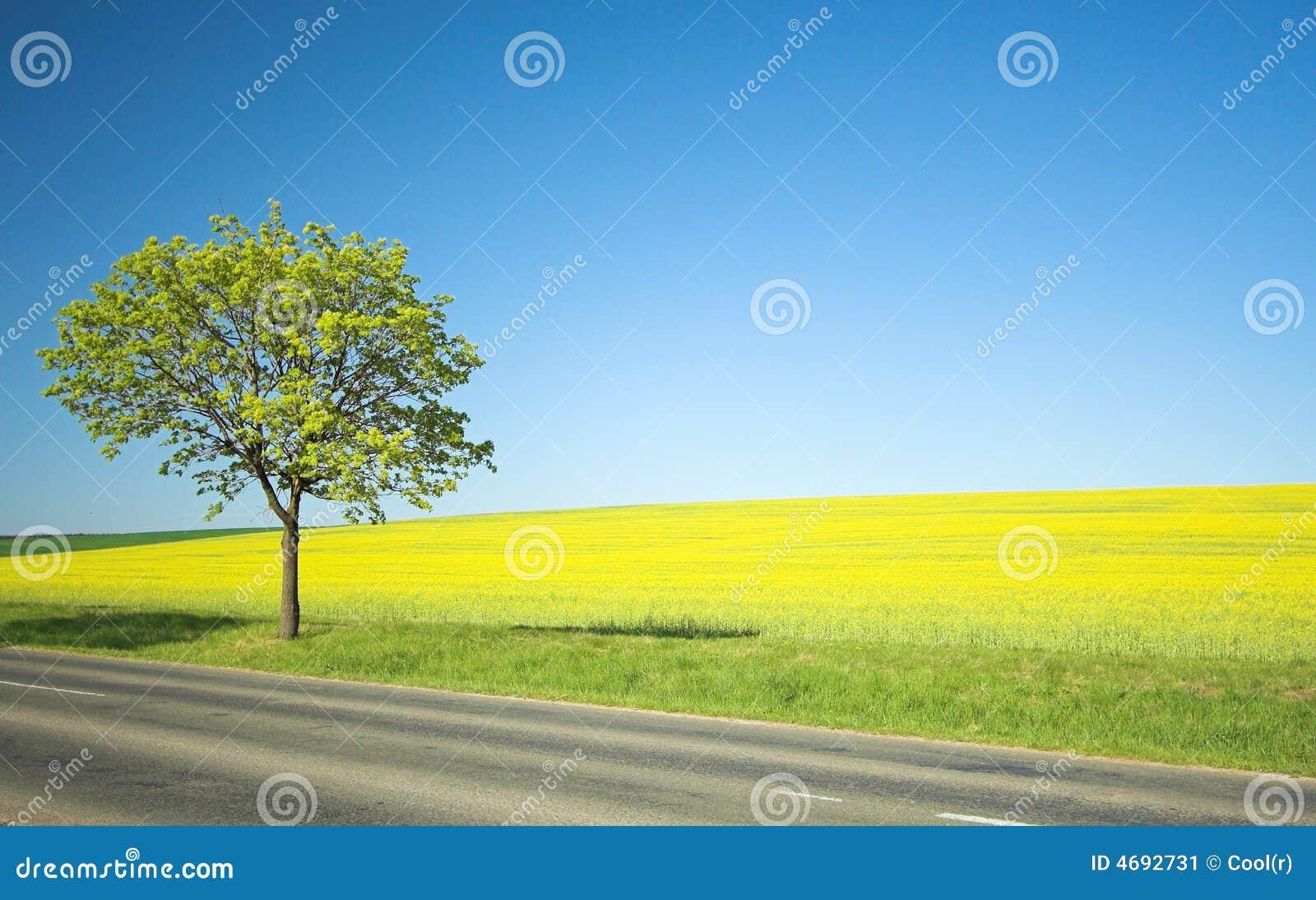 Campo amarillo y árbol solo