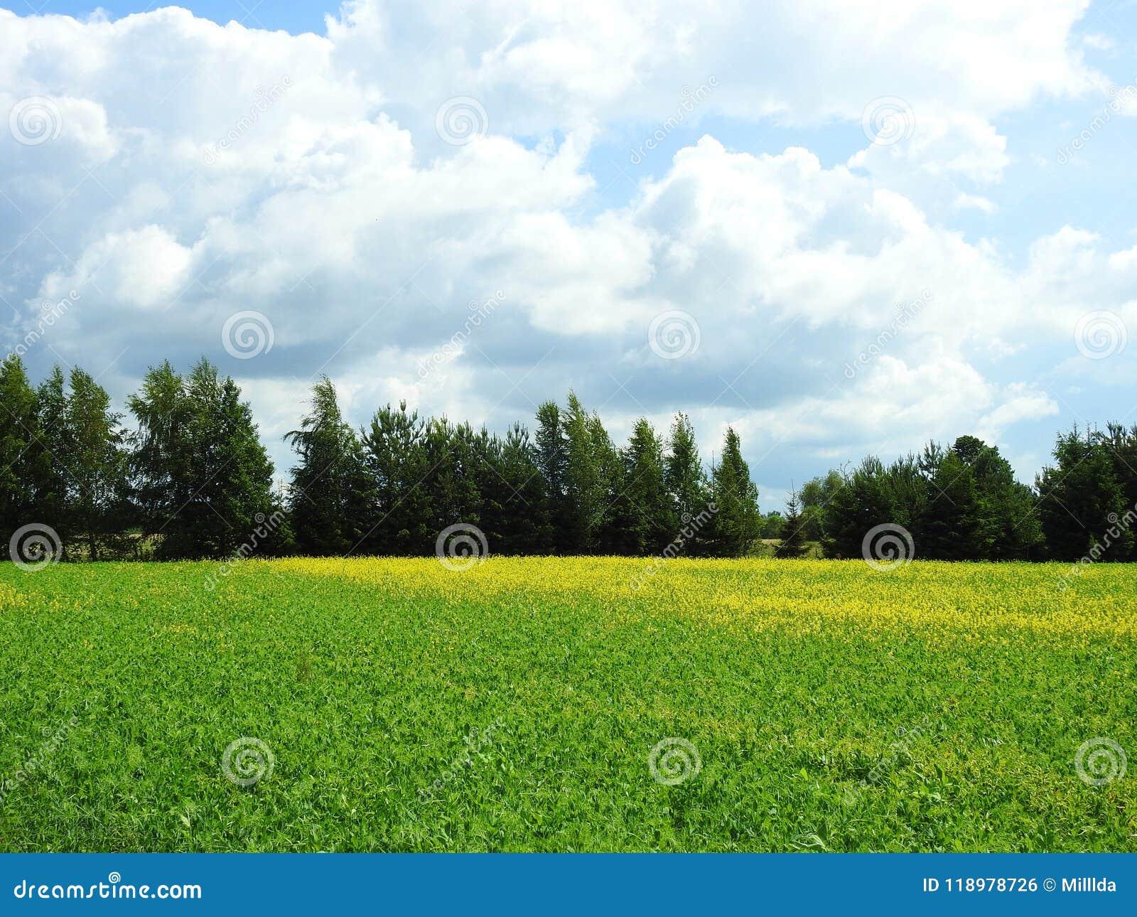 Campo colorido en verano, Lituania