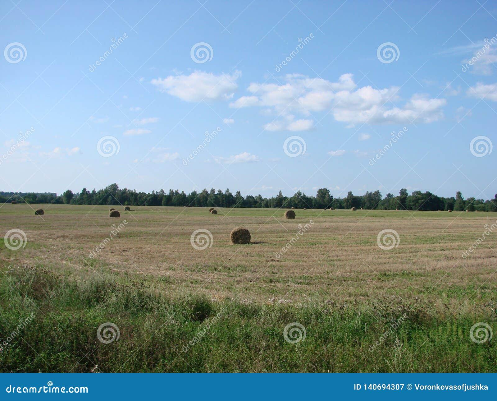 Campo com grama e feno cortados em Bielorrússia