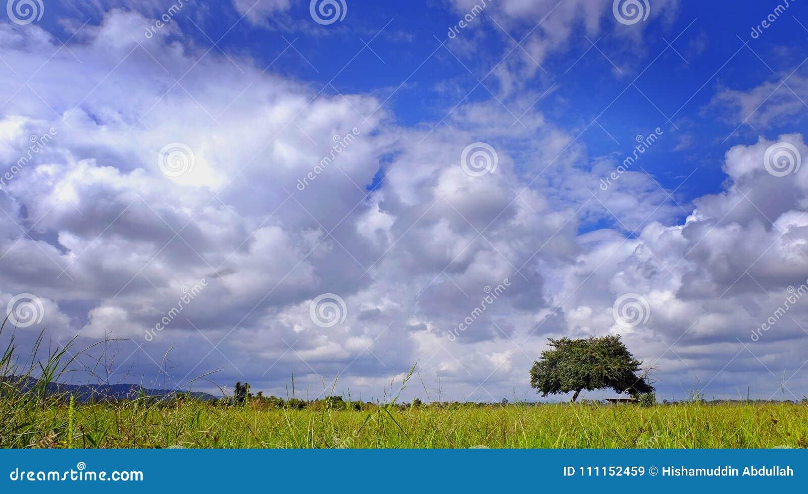 Campo con el cielo azul