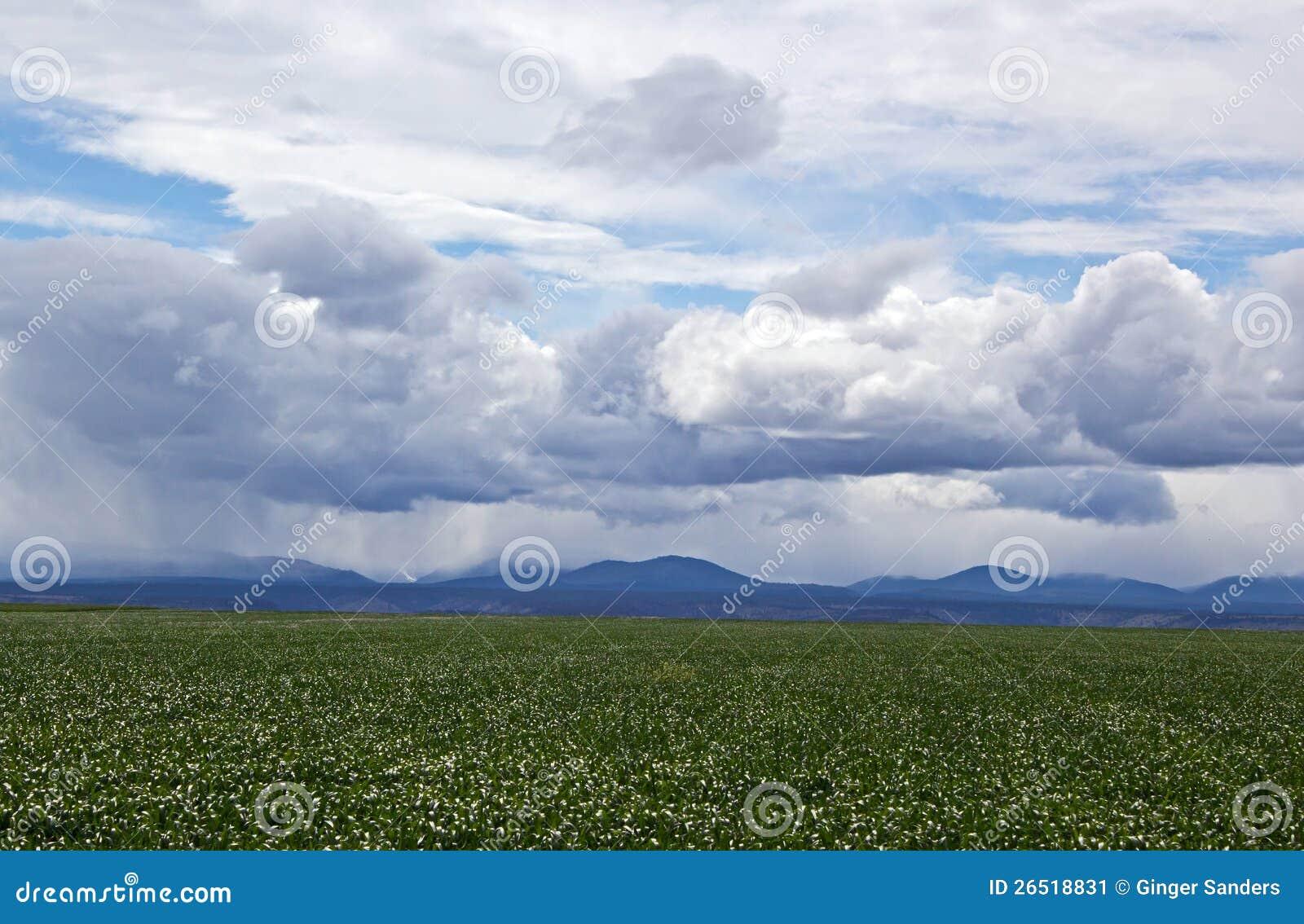 Campo da agricultura sob céus tormentosos