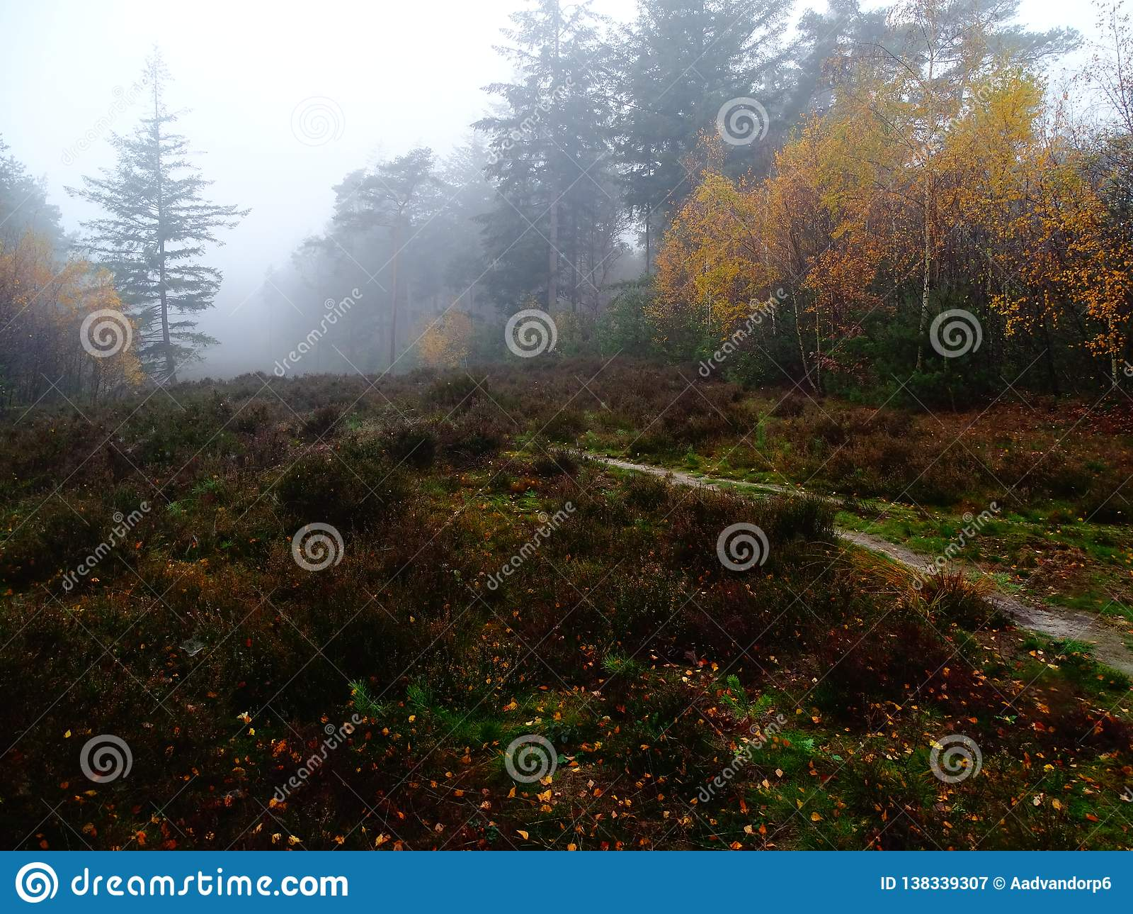 Campo da urze na paisagem colorida do outono