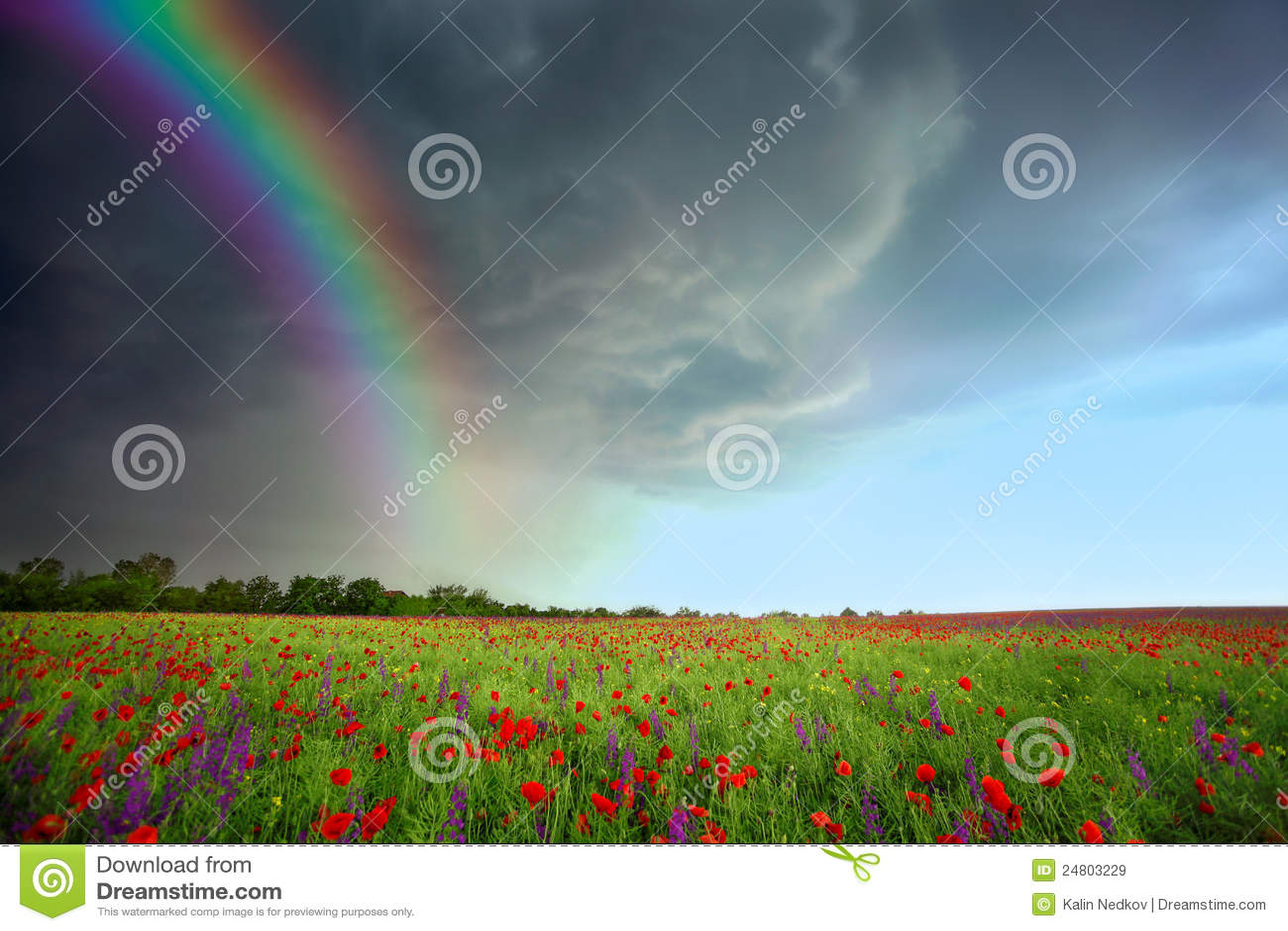 Campo das flores