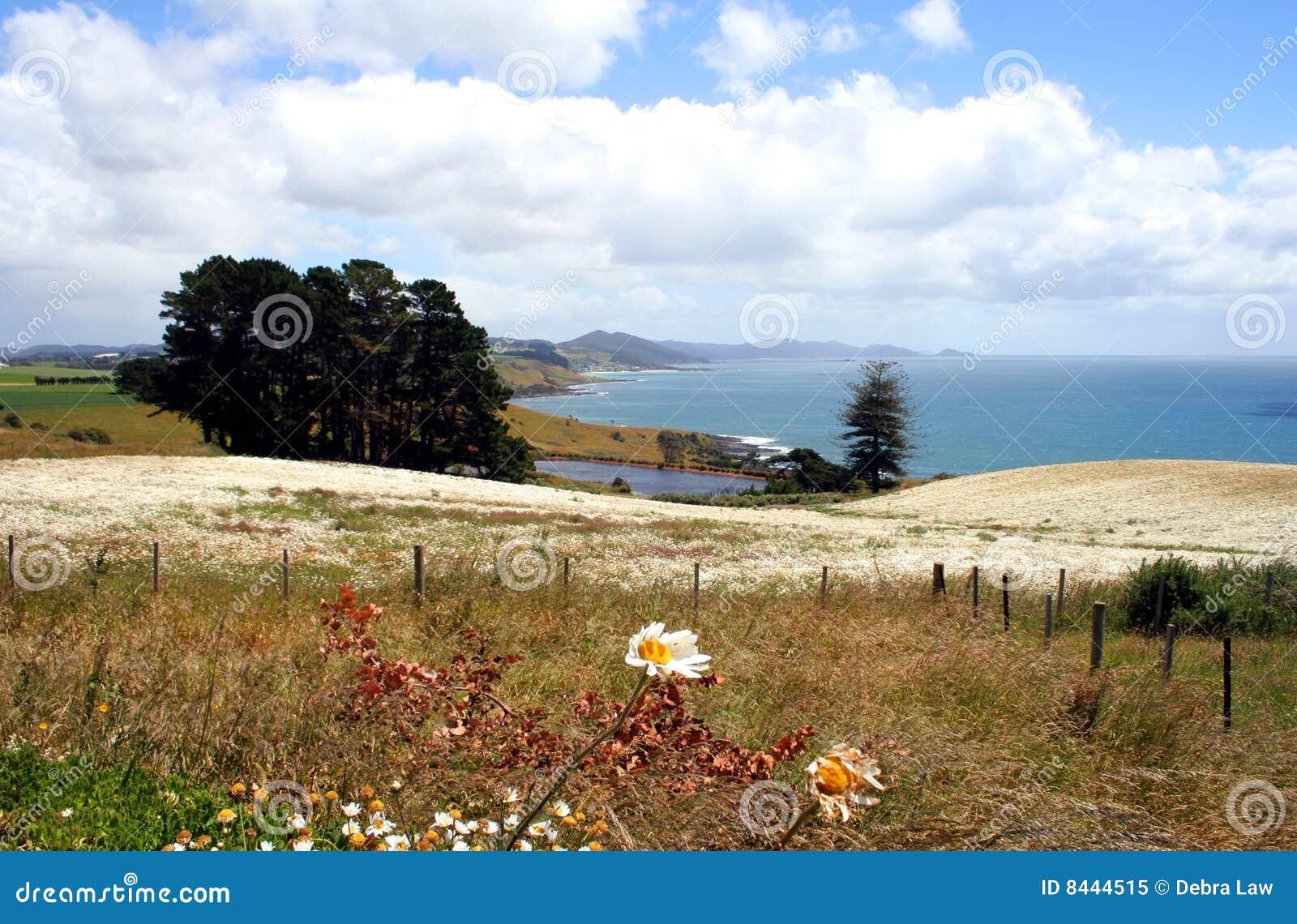 Campo das flores, Tasmânia, Austrália