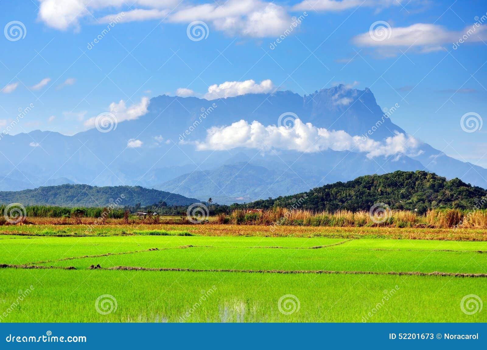Campo de almofada e Mt Opinião de Kinabalu em Kota Belud, Sabah